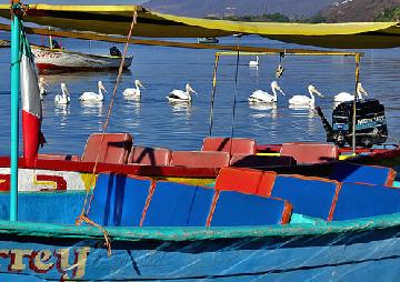 Lake Chapala Flora and Fauna